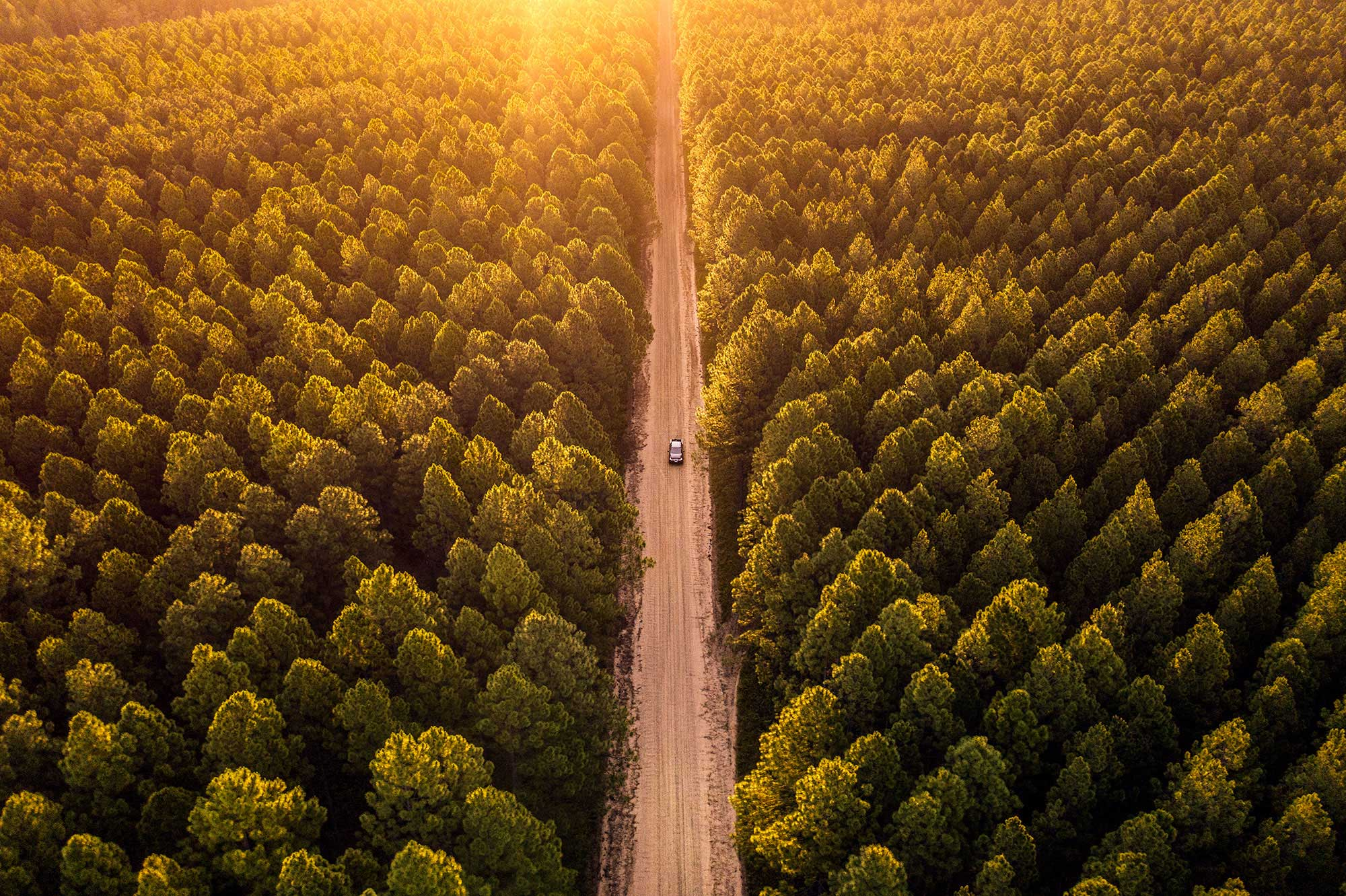 Jeff_Camden_car_drone_forest_2